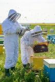 Beekeeper на работе во время времени весны защищенного костюмом Стоковые Изображения RF
