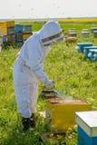 Beekeeper на работе во время времени весны защищенного костюмом Стоковые Фото