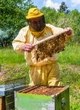 Beekeeper на работе с пчелами Стоковые Фото
