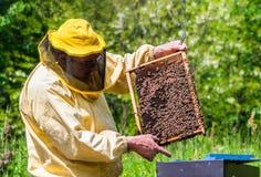 Beekeeper на работе с пчелами Стоковое Фото