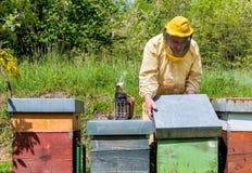 Beekeeper на работе с пчелами Стоковая Фотография RF