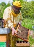 Beekeeper на работе с пчелами Стоковые Изображения RF