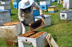 Beekeeper принимает рамку от hive_3 Стоковые Изображения