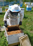 Beekeeper принимает рамку от hive_5 Стоковая Фотография RF