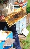 Beekeeper проверяя крапивницу пчел стоковое изображение