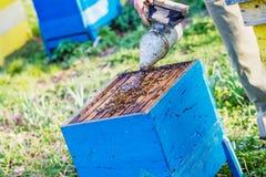 beekeeper проверяя крапивницу Стоковые Изображения