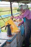 Beekeeper работает с пчелами и ульями на пасеке Beekeeper на пасеке Beekeeper вытягивая рамку от крапивницы Стоковое фото RF