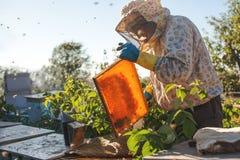 Beekeeper работает с пчелами и ульями на пасеке Beekeeper на пасеке Стоковое Изображение RF