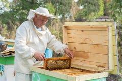 Beekeeper работает с пчелами и ульями на пасеке Стоковая Фотография