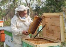 Beekeeper работает с пчелами и ульями на пасеке Стоковое Изображение RF