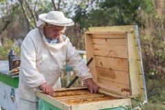 Beekeeper работает с пчелами и ульями на пасеке Стоковые Изображения RF