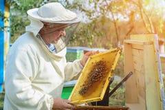 Beekeeper работает с пчелами и ульями на пасеке Apiculture Стоковые Фото