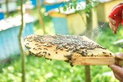 Beekeeper работая в его пасеке держа рамку сота Стоковое фото RF