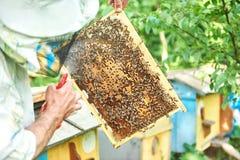 Beekeeper работая в его пасеке держа рамку сота Стоковые Фото