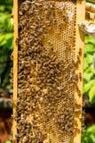 Beekeeper работая на его ульях в саде Стоковая Фотография RF