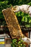 Beekeeper работая на его ульях в саде Стоковое Фото