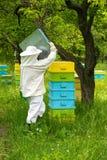 Beekeeper работая на его ульях в саде Стоковые Фото