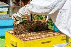 Beekeeper работая на его ульях в саде Стоковые Изображения RF