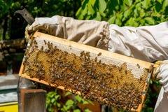 Beekeeper работая на его ульях в саде Стоковые Изображения