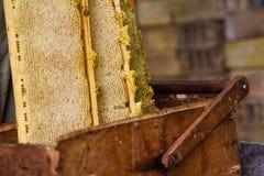Beekeeper работая на крапивнице пчелы Стоковая Фотография