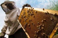 Beekeeper работая на улье Стоковые Фотографии RF