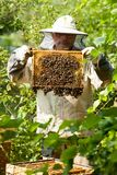 Beekeeper смотрит улей Собрание меда и управление пчелы Стоковая Фотография RF