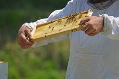 Beekeeper с гребнем меда стоковые фотографии rf