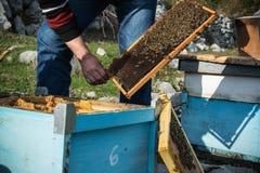 Beekeeper с ульем Подлинная жизнь фермы Стоковые Изображения