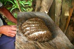 beekeeper традиционный Стоковая Фотография