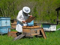 Beekeeper 1. A beekeeper in veil at apiary among hives. Summer, sunny day. Russian Far East, Primorye Stock Image