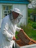beekeeper 14 Arkivbilder