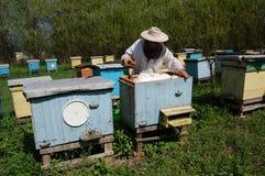 beekeeper Стоковая Фотография