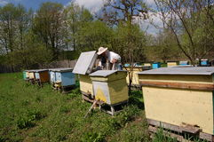 Beekeeper Royalty Free Stock Images