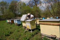 beekeeper Стоковые Изображения RF