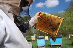 beekeeper Стоковые Изображения