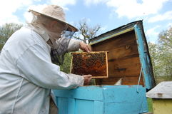 Free Beekeeper Stock Photography - 14208092
