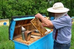 beekeeper Стоковое Изображение