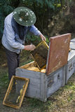 beekeeper Royaltyfria Bilder