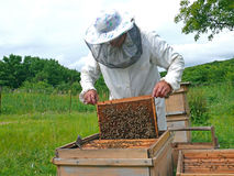 Beekeeper 22 Royalty Free Stock Photos