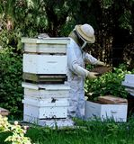 Beekeeper. Most beekeepers are hobby beekeepers.[1] These people typically work or own only a few hives. Their main attraction is an interest in ecology and Stock Photography