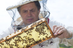 Beekeeper. Royalty Free Stock Photos