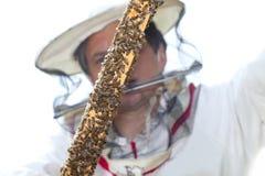 Beekeeper. Stock Photography
