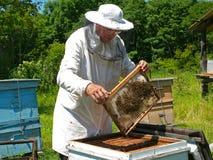 beekeeper 26 Royaltyfri Foto