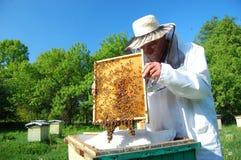 Beekeeper Стоковое фото RF