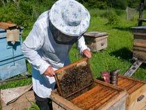 beekeeper 29 Royaltyfri Fotografi