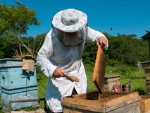 Beekeeper 31. A beekeeper in veil at apiary among hives. Summer, sunny day. Russian Far East, Primorye Stock Photos
