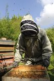 Beekeeper Arkivbilder