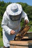 Beekeeper 33 Royalty Free Stock Photography