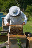 Beekeeper 36 Stock Photography