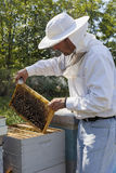 Beekeeper. Handsome beekeeper at field inspecting bee hive Royalty Free Stock Photo